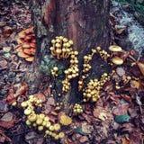 Forêt merveilleuse Images libres de droits