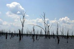 Forêt morte Images stock