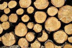 Forêt morte Image stock