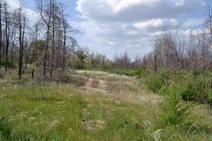 Forêt morte photo stock