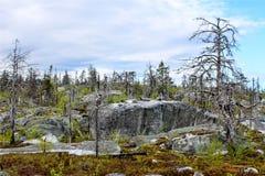 Forêt morte Photographie stock libre de droits