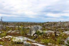 Forêt morte Images libres de droits