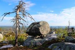 Forêt morte Image libre de droits