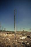 Forêt morte de montagnes de Sumava Images libres de droits