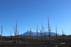 Forêt morte, volcan de Tolbachik Photo stock