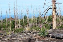 Forêt morte, volcan de Tolbachik Photos libres de droits