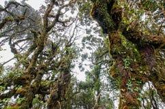 Forêt moussue Photographie stock libre de droits