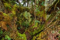 Forêt moussue Image libre de droits