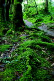 Forêt moussue Photos stock