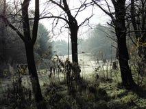 Forêt musquée Photographie stock libre de droits