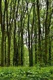 Forêt mystérieuse Image stock
