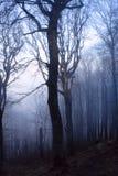 Forêt mystérieuse Photo libre de droits
