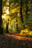 Forêt mystérieuse Photos stock