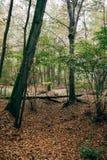 Forêt mystérieuse Image libre de droits