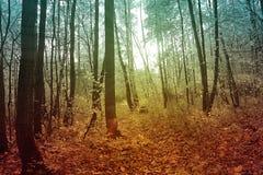 Forêt mystérieuse Photos libres de droits