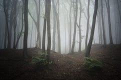 Forêt mystérieuse avec le brouillard Photographie stock libre de droits