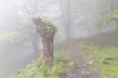 Forêt mystérieuse dans un matin très brumeux Images stock