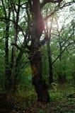 Forêt mystérieuse en automne image stock