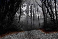 Forêt mystique images stock