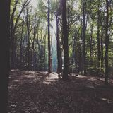 Forêt mystique Photos stock
