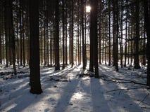Forêt mystique Images libres de droits