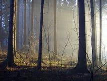 Forêt mystique avec la belle lumière Photographie stock