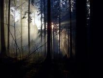 Forêt mystique avec la belle lumière Image libre de droits