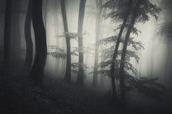 Forêt mystique avec le brouillard mystérieux Image libre de droits