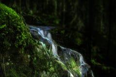 Forêt mystique avec un ressort naturel photo stock