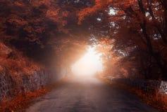 Forêt mystique d'automne avec la route en brouillard photographie stock libre de droits