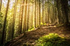 Forêt mystique dans les rayons de la lumière du soleil Photographie stock libre de droits