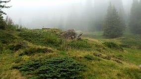 Forêt mystique enchantée photo stock