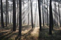 Forêt mystique, rayons du soleil photo libre de droits