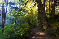 Forêt nationale olympique Photo libre de droits