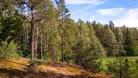 Forêt naturelle avec des rochers de granit Nature du nord, forêt un jour ensoleillé avec des nuages dans le ciel photo libre de droits
