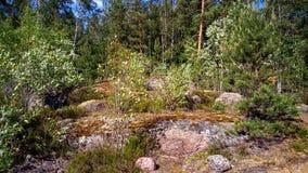 Forêt naturelle avec des rochers de granit Nature du nord, forêt un jour ensoleillé avec des nuages dans le ciel image libre de droits