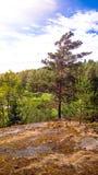 Forêt naturelle avec des rochers de granit Nature du nord, forêt un jour ensoleillé avec des nuages dans le ciel images libres de droits