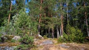 Forêt naturelle avec des rochers de granit Nature du nord, forêt un jour ensoleillé avec des nuages dans le ciel photographie stock libre de droits