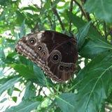Forêt naturelle de vert de beauté de nature de papillon Image libre de droits
