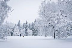 Forêt neigée Photos libres de droits