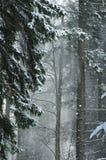 Forêt neigée image libre de droits