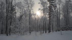 Forêt neigeuse d'hiver banque de vidéos