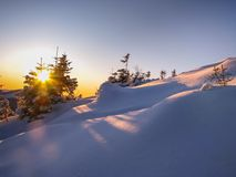 Forêt neigeuse de Carpathiens d'Ukrainien au lever de soleil Photo libre de droits