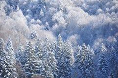 Forêt neigeuse de Carpathiens d'Ukrainien pendant le matin Photo stock