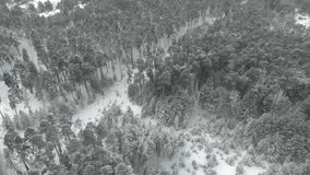 Forêt neigeuse de pin d'hiver, vue aérienne avec le bourdon banque de vidéos