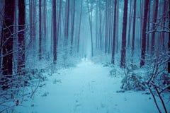 Forêt neigeuse de pin en hiver Photographie stock libre de droits