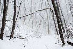 Forêt neigeuse mystérieuse d'hiver de Noël Image stock