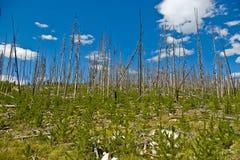 Forêt neuve Images libres de droits