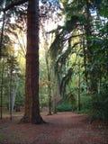 Forêt neuve Image libre de droits