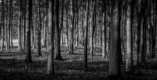 Forêt noire image libre de droits